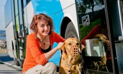 Ein Bild von einer jungen Frau, die mit ihrem Maulkorb tragenden Hund vor einem Bus sitzt